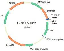 GPNMB / Osteoactivin NucleicAcid