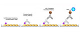 Cell-Based Phosphorylation ELISA Platform Overview