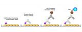 Cell-Based Phosphorylation ELISA Platform Overview