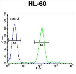 Myeloperoxidase Antibody flow cytometry of HL-60 cells (right histogram) compared to a negative control cell (left histogram). FITC-conjugated goat-anti-rabbit secondary antibodies were used for the analysis.