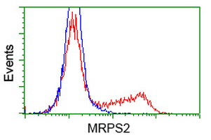MRPS2 Antibody - HEK293T cells transfected with either overexpress plasmid (Red) or empty vector control plasmid (Blue) were immunostained by anti-MRPS2 antibody, and then analyzed by flow cytometry.
