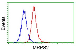 MRPS2 Antibody - Flow cytometry of HeLa cells, using anti-MRPS2 antibody (Red), compared to a nonspecific negative control antibody (Blue).