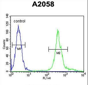 MRPS24 Antibody - MRPS24 Antibody flow cytometry of A2058 cells (right histogram) compared to a negative control cell (left histogram). FITC-conjugated goat-anti-rabbit secondary antibodies were used for the analysis.