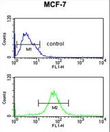 MRPS25 Antibody - RT25 Antibody flow cytometry of MCF-7 cells (bottom histogram) compared to a negative control cell (top histogram). FITC-conjugated goat-anti-rabbit secondary antibodies were used for the analysis.