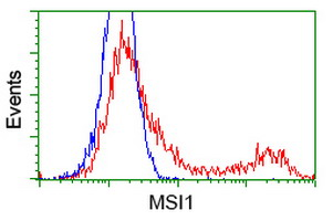 MSI1 / Musashi 1 Antibody - HEK293T cells transfected with either overexpress plasmid (Red) or empty vector control plasmid (Blue) were immunostained by anti-MSI1 antibody, and then analyzed by flow cytometry.