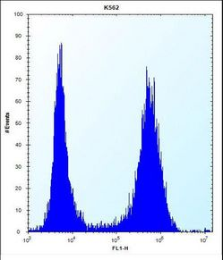 ND3 Antibody flow cytometry of K562 cells (right histogram) compared to a negative control cell (left histogram). FITC-conjugated donkey-anti-rabbit secondary antibodies were used for the analysis.