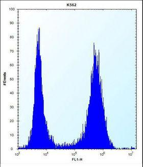 MT-ND3 Antibody - ND3 Antibody flow cytometry of K562 cells (right histogram) compared to a negative control cell (left histogram). FITC-conjugated donkey-anti-rabbit secondary antibodies were used for the analysis.