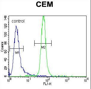 MUSK Antibody flow cytometry of CEM cells (right histogram) compared to a negative control cell (left histogram). FITC-conjugated goat-anti-rabbit secondary antibodies were used for the analysis.