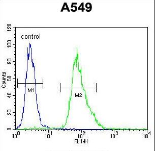 MYBPHL Antibody flow cytometry of A549 cells (right histogram) compared to a negative control cell (left histogram). FITC-conjugated goat-anti-rabbit secondary antibodies were used for the analysis.