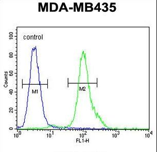 MYCT1 Antibody - MYCT1 Antibody flow cytometry of MDA-MB435 cells (right histogram) compared to a negative control cell (left histogram). FITC-conjugated goat-anti-rabbit secondary antibodies were used for the analysis.