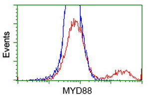 MYD88 Antibody - HEK293T cells transfected with either overexpress plasmid (Red) or empty vector control plasmid (Blue) were immunostained by anti-MYD88 antibody, and then analyzed by flow cytometry.