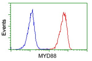 MYD88 Antibody - Flow cytometry of Jurkat cells, using anti-MYD88 antibody (Red), compared to a nonspecific negative control antibody (Blue).