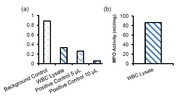 (a) Measurement of MPO activity using WBC lysate (3 µg), and MPO Positive Control (5 µl) and (10 µl). (b) MPO specific activity in WBC lysate.