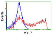 HEK293T cells transfected with either overexpress plasmid (Red) or empty vector control plasmid (Blue) were immunostained by anti-MYL7 antibody, and then analyzed by flow cytometry.
