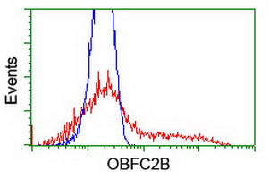 NABP2 Antibody - HEK293T cells transfected with either overexpress plasmid (Red) or empty vector control plasmid (Blue) were immunostained by anti-OBFC2B antibody, and then analyzed by flow cytometry.