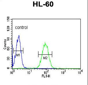 NASP Antibody - NASP Antibody flow cytometry of HL-60 cells (right histogram) compared to a negative control cell (left histogram). FITC-conjugated goat-anti-rabbit secondary antibodies were used for the analysis.