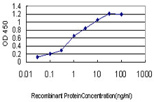 NCAPD2 Antibody - Detection limit for recombinant GST tagged CNAP1 is approximately 0.1 ng/ml as a capture antibody.