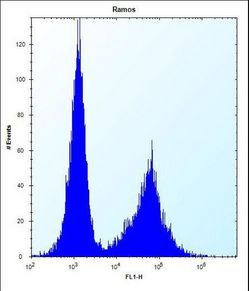 NDN Antibody flow cytometry of Ramos cells (right histogram) compared to a negative control cell (left histogram). FITC-conjugated donkey-anti-rabbit secondary antibodies were used for the analysis.