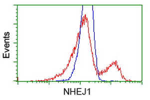 NHEJ1 / XLF Antibody - HEK293T cells transfected with either overexpress plasmid (Red) or empty vector control plasmid (Blue) were immunostained by anti-NHEJ1 antibody, and then analyzed by flow cytometry.