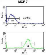 NIP7 Antibody flow cytometry of MCF-7 cells (bottom histogram) compared to a negative control cell (top histogram). FITC-conjugated goat-anti-rabbit secondary antibodies were used for the analysis.