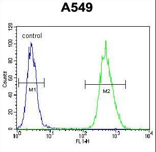 NIX Antibody flow cytometry of A549 cells (right histogram) compared to a negative control cell (left histogram). FITC-conjugated goat-anti-rabbit secondary antibodies were used for the analysis.