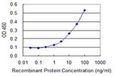 Detection limit for recombinant GST tagged BNIP3L is 0.3 ng/ml as a capture antibody.