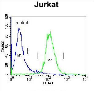 NKD2 Antibody - NKD2 Antibody flow cytometry of Jurkat cells (right histogram) compared to a negative control cell (left histogram). FITC-conjugated donkey-anti-rabbit secondary antibodies were used for the analysis.