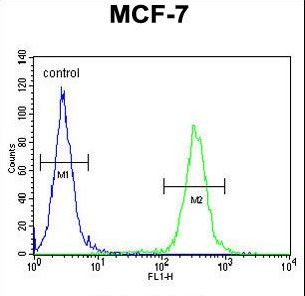 NKPD1 Antibody - NKPD1 Antibody flow cytometry of MCF-7 cells (right histogram) compared to a negative control cell (left histogram). FITC-conjugated goat-anti-rabbit secondary antibodies were used for the analysis.