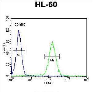 NOS1AP / CAPON Antibody - NOS1AP Antibody flow cytometry of HL-60 cells (right histogram) compared to a negative control cell (left histogram). FITC-conjugated goat-anti-rabbit secondary antibodies were used for the analysis.