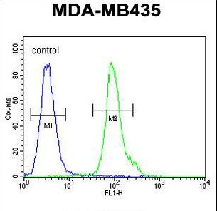 NPM3 Antibody - NPM3 Antibody flow cytometry of MDA-MB435 cells (right histogram) compared to a negative control cell (left histogram). FITC-conjugated goat-anti-rabbit secondary antibodies were used for the analysis.