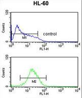 NR1I2 / PXR Antibody - NR1I2 Antibody flow cytometry of HL-60 cells (bottom histogram) compared to a negative control cell (top histogram). FITC-conjugated goat-anti-rabbit secondary antibodies were used for the analysis.