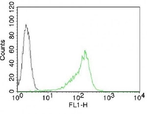 Nuclear Membrane Marker NM97 Antibody - Intracellular FACS testing of 293 cells with Nucleoli marker antibody (green).  This image was taken for the unmodified form of this product. Other forms have not been tested.