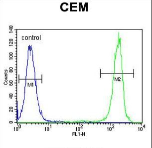 NUDT22 Antibody - NUDT22 Antibody flow cytometry of CEM cells (right histogram) compared to a negative control cell (left histogram). FITC-conjugated goat-anti-rabbit secondary antibodies were used for the analysis.