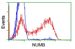 HEK293T cells transfected with either overexpress plasmid (Red) or empty vector control plasmid (Blue) were immunostained by anti-NUMB antibody, and then analyzed by flow cytometry.