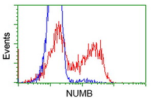 NUMB Antibody - HEK293T cells transfected with either overexpress plasmid (Red) or empty vector control plasmid (Blue) were immunostained by anti-NUMB antibody, and then analyzed by flow cytometry.