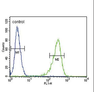 OAT Antibody - OAT Antibody flow cytometry of 293 cells (right histogram) compared to a negative control cell (left histogram). FITC-conjugated goat-anti-rabbit secondary antibodies were used for the analysis.