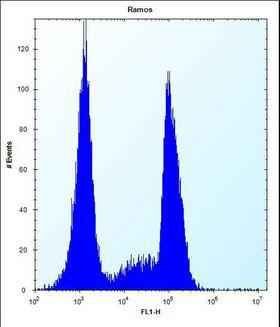 OR10G9 Antibody - OR10G9 Antibody flow cytometry of Ramos cells (right histogram) compared to a negative control cell (left histogram). FITC-conjugated donkey-anti-rabbit secondary antibodies were used for the analysis.