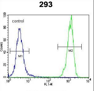 OR10H1 Antibody - OR10H1 Antibody flow cytometry of 293 cells (right histogram) compared to a negative control cell (left histogram). FITC-conjugated goat-anti-rabbit secondary antibodies were used for the analysis.