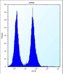 OR11L1 Antibody flow cytometry of Jurkat cells (right histogram) compared to a negative control cell (left histogram). FITC-conjugated donkey-anti-rabbit secondary antibodies were used for the analysis.