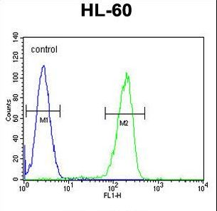 OR2F2 Antibody flow cytometry of HL-60 cells (right histogram) compared to a negative control cell (left histogram). FITC-conjugated goat-anti-rabbit secondary antibodies were used for the analysis.