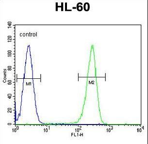 OR2W3 Antibody - OR2W3 Antibody flow cytometry of HL-60 cells (right histogram) compared to a negative control cell (left histogram). FITC-conjugated goat-anti-rabbit secondary antibodies were used for the analysis.