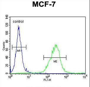 OR6C4 Antibody - OR6C4 Antibody flow cytometry of MCF-7 cells (right histogram) compared to a negative control cell (left histogram). FITC-conjugated goat-anti-rabbit secondary antibodies were used for the analysis.