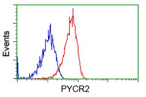 Flow cytometry of Jurkat cells, using anti-PYCR2 antibody, (Red), compared to a nonspecific negative control antibody, (Blue).