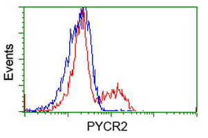 HEK293T cells transfected with either overexpress plasmid (Red) or empty vector control plasmid (Blue) were immunostained by anti-PYCR2 antibody, and then analyzed by flow cytometry.