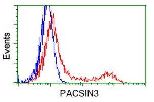 PACSIN3 Antibody - HEK293T cells transfected with either overexpress plasmid (Red) or empty vector control plasmid (Blue) were immunostained by anti-PACSIN3 antibody, and then analyzed by flow cytometry.