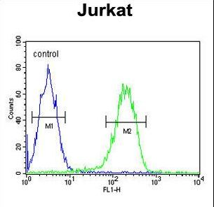PAN3 Antibody - PAN3 Antibody flow cytometry of Jurkat cells (right histogram) compared to a negative control cell (left histogram). FITC-conjugated goat-anti-rabbit secondary antibodies were used for the analysis.