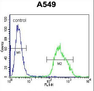 Paralemmin 3 / PALM3 Antibody - PALM3 Antibody flow cytometry of A549 cells (right histogram) compared to a negative control cell (left histogram). FITC-conjugated goat-anti-rabbit secondary antibodies were used for the analysis.