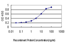 CORO1A / Coronin 1a Antibody - Detection limit for recombinant GST tagged CORO1A is approximately 0.1 ng/ml as a capture antibody.
