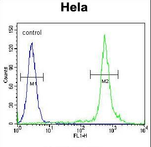 NKX2-1 / Thyroid-Specific TF Antibody - NKX2-1 Antibody flow cytometry of HeLa cells (right histogram) compared to a negative control cell (left histogram). FITC-conjugated goat-anti-rabbit secondary antibodies were used for the analysis.