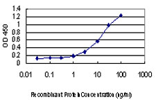 TFAP2A / AP-2 Antibody - Detection limit for recombinant GST tagged TFAP2A is approximately 1 ng/ml as a capture antibody.
